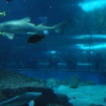 Requin, et Delphine en fond