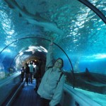 Tunnel de Requins