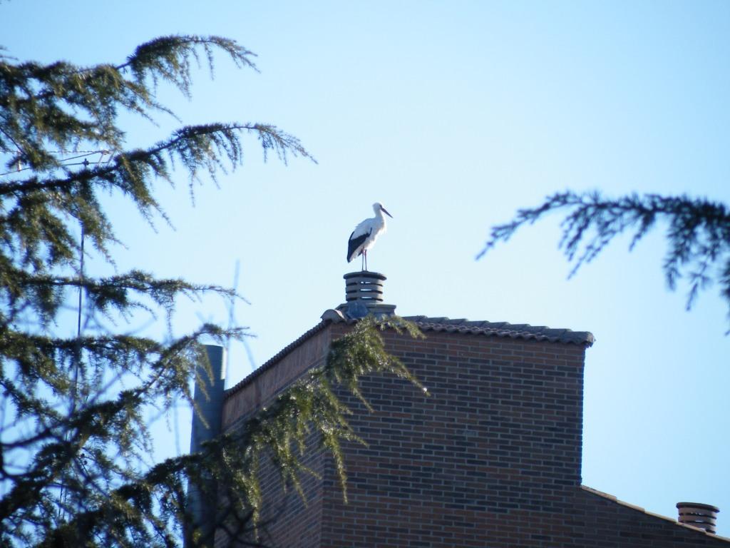 Une cigogne à Avila